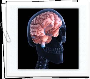 Brain Reroutes Information When Damaged