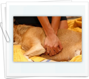 Recovery success rate of CPR on a cat or dog