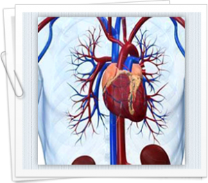 Symptoms to alert you if likely arrhythmias