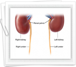 Managing the effects of internal organs in the body